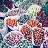 Wangerländer Garten- und Pflanzenmesse
