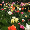 Frühlingserwachen Neuried