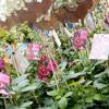 Frühjahrsmesse Garten & Ambiente Bodensee IBO 8