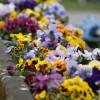 Garten Frühling Lebensart Gießen 7