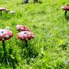 25. Nettetaler Herbstpflanzenbörse