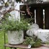 Rosen- und Gartenfestival Weiden 7