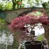 Gartenfestival Herrenhausen 3