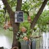 Gartentage - Unkel 8