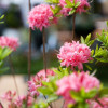Lebensraum Garten - Gut Mergenthau
