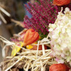 Herbstzauber Laubach 5