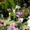Home & Garden Ludwigsburg 8