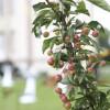 Das Gartenfest Corvey 7