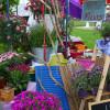 Petite Fleur - Hockenheim