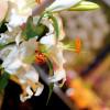 Garten Frühling Lebensart Gießen 5