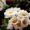 Garten Frühling Lebensart Gießen 3
