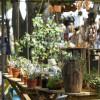 Deutsch-Amerikanisches Gartenfestival 3