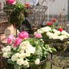 Blumen- Pflanzen- & Gartenmarkt Recklinghausen