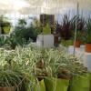 Gartenträume Landgut Krumme 1