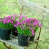 Gartenromantik Mölln