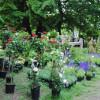 Romantic Garden 4
