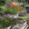 Rosen, Garten & Ambiente-Markt 5