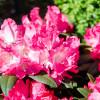 Botanischer Frühlings- und Pflanzenmarkt Bremen 2015