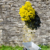 Nettetaler Herbstpflanzenbörse 1