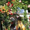 Tölzer Rosen- und Gartentage 10