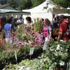 Tölzer Rosen- und Gartentage 3
