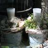 Bellheimer Gartentage
