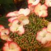 Sammlertag für Pflanzen