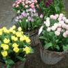 Gartenmarkt Sommer - Blüten - Träume