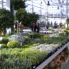 Markttage bei Garten von Ehren