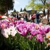Gartenmarkt Späth'er Frühling 6
