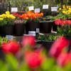 Gartenmarkt Späth'er Frühling 2017