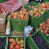 Veranstaltung: Herbstmarkt im LandPark Lauenbrück