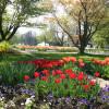 Du und dein Garten: Spezialmarkt 1
