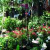 2. Gartenfestival Wasserschloss Inzlingen 2017 1
