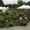 DiGA Ulm-Wiblingen 2017- Die Gartenmesse 8