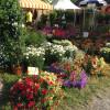 Veranstaltung: 2. Gartenzauber Wolfegg