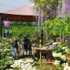 Pflanzenmarkt im Hessenpark 6