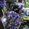 Pflanzenmarkt im Hessenpark 3