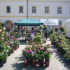 Gartenzauber Aldersbach 9