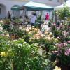 Gartenzauber Aldersbach 8