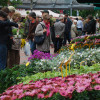 Blumen- und Gartenmarkt Essen Steele 2017 2