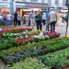 Blumen- und Gartenmarkt Herten 2017 3