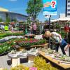 Blumen- und Gartenmarkt Herten 2017 1