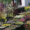 Gartentage Lindau 2017 8