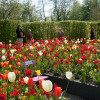 Ippenburger Frühlingsfestival 1