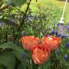 Gartentage Schwabmünchen