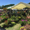 DiGA Ulm - Wiblingen - Die Gartenmesse