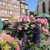 Blumenmarkt Mosbach 1
