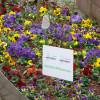 Northeimer Frühlingserwachen - Haus & Gartentrends 2