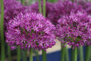 Tolle Tipps für Zuhause gibt es auf jeder Gartenveranstaltung!